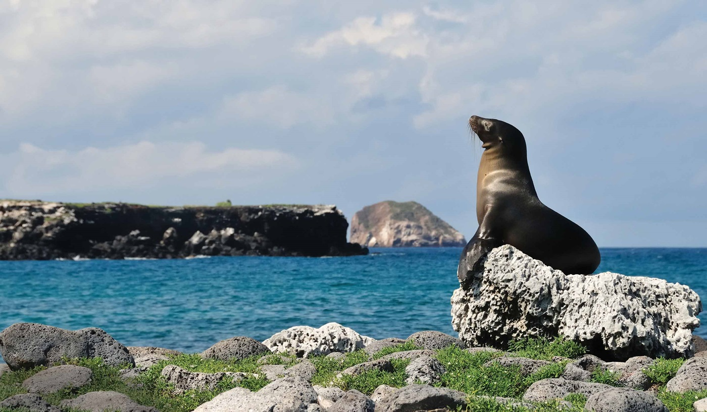 Galapagos Escorted Cruises