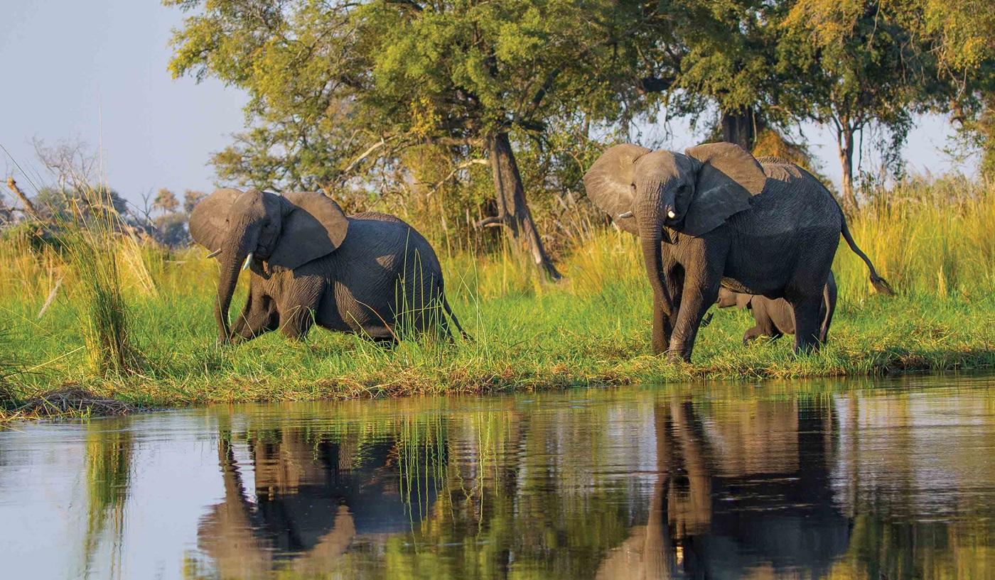 Botswana South Africa Zambia Safari
