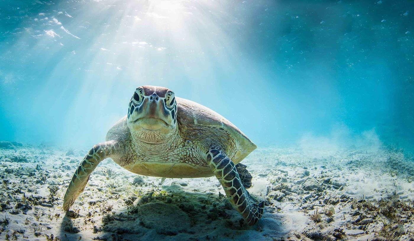 Hidden Galapagos Peru Escorted Tour