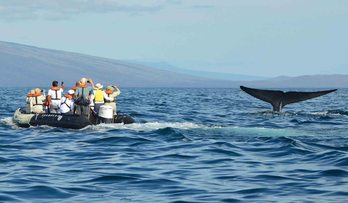 Cruising the Galapagos Islands Family Cruise