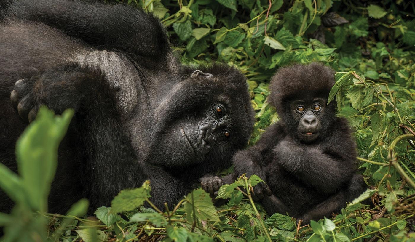 Tanzania Zanzibar Rwanda Safari Tour