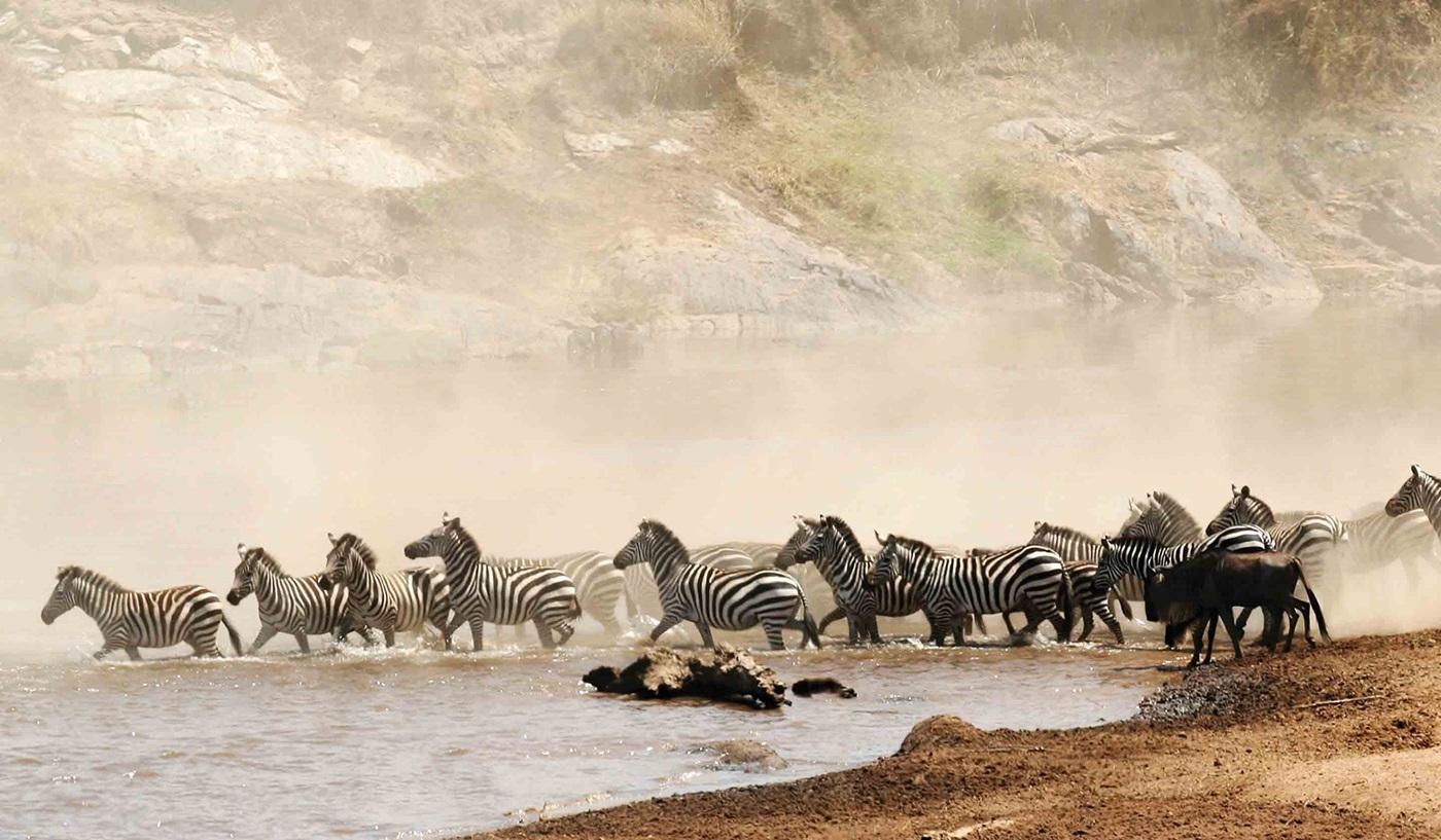 Classic Safari Kenya Tanzania Escorted Tour