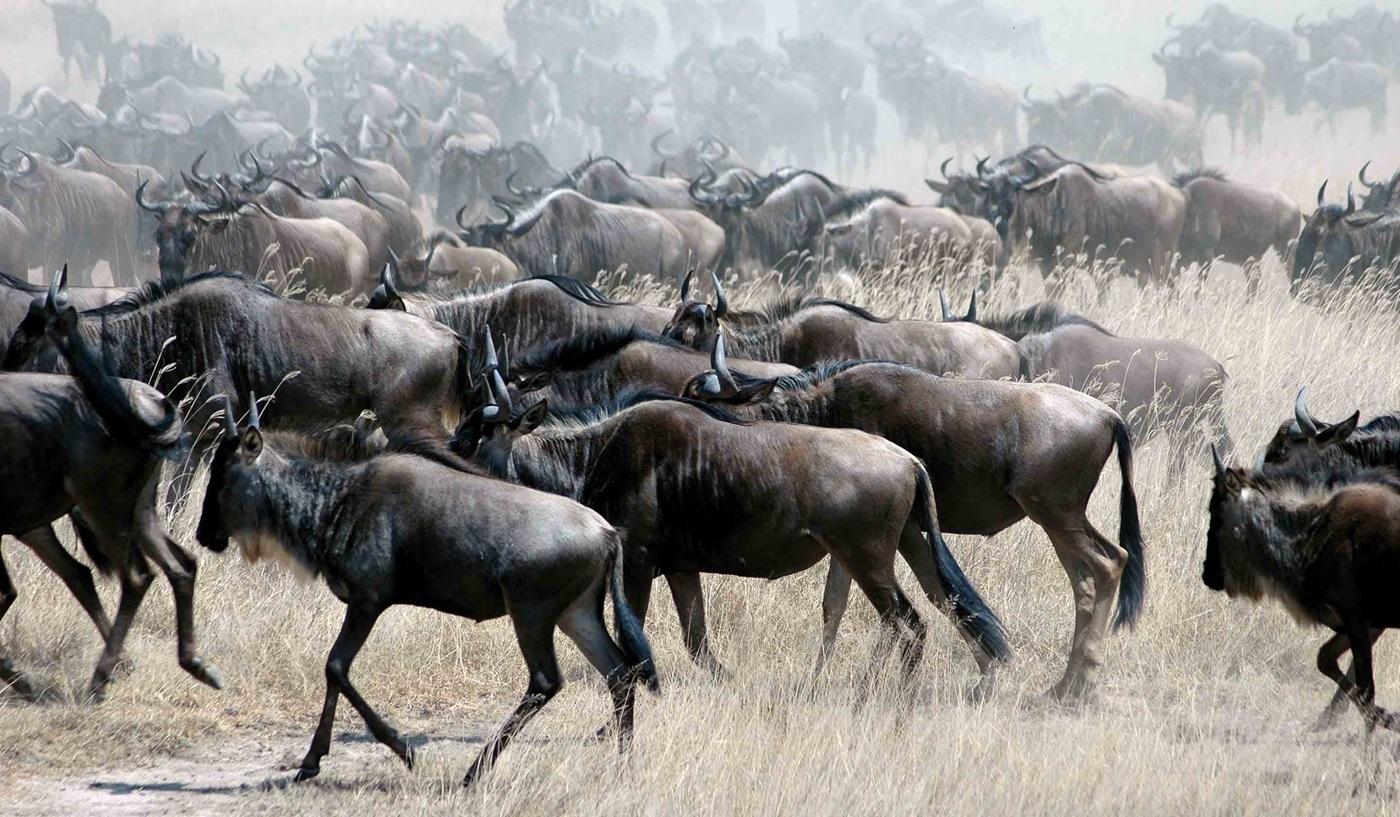 Great Migration Tanzania Kenya Safari