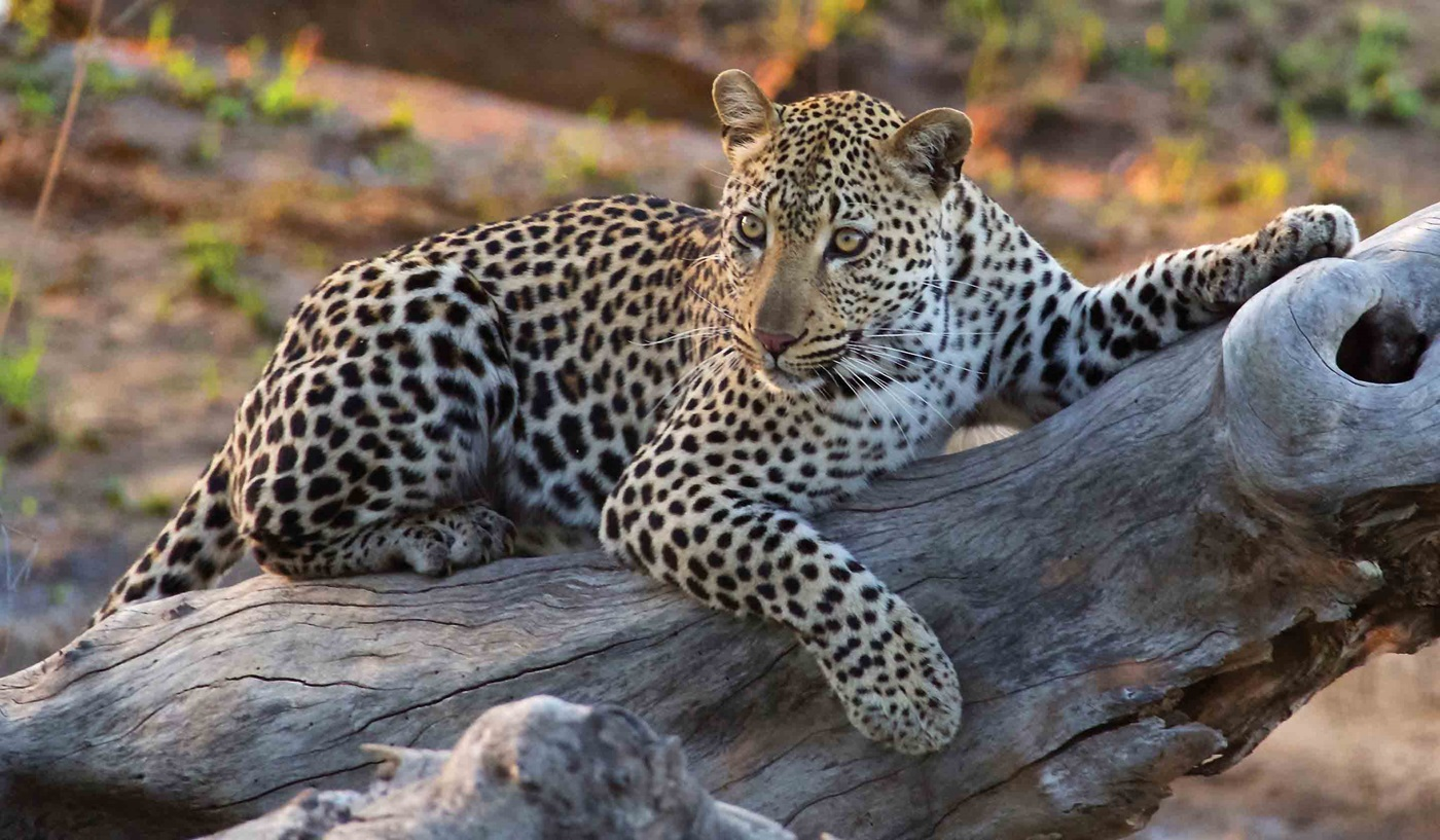 Elegant Adventure South Africa Tour and Safari