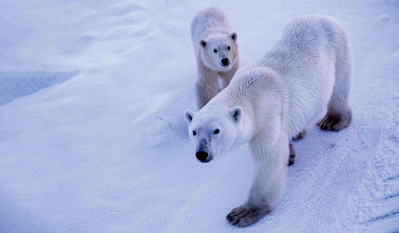 Manitoba Polar Bear Tours