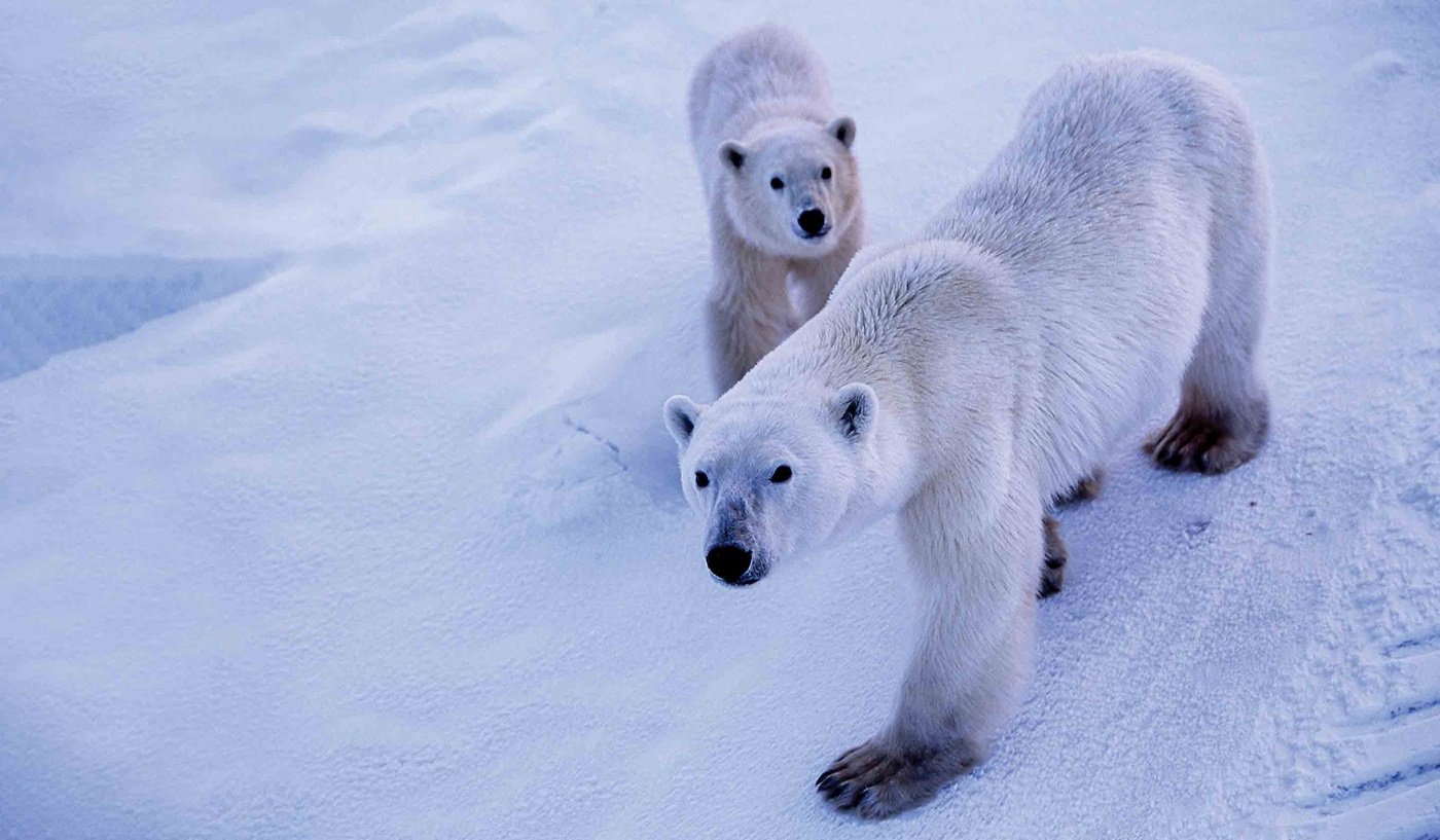 Manitoba Polar Bear Tours