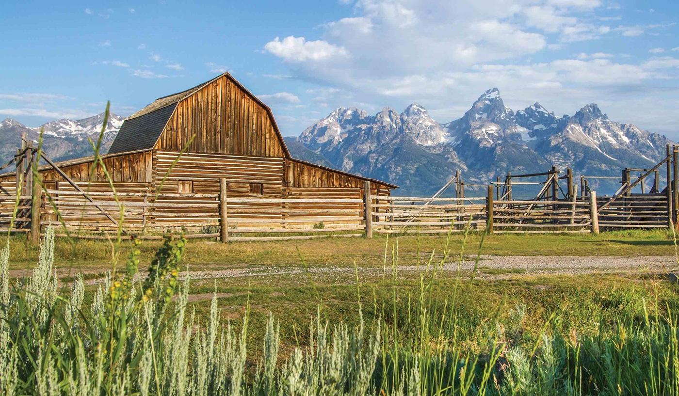 American Safari Tetons Yellowstone Escorted Tour