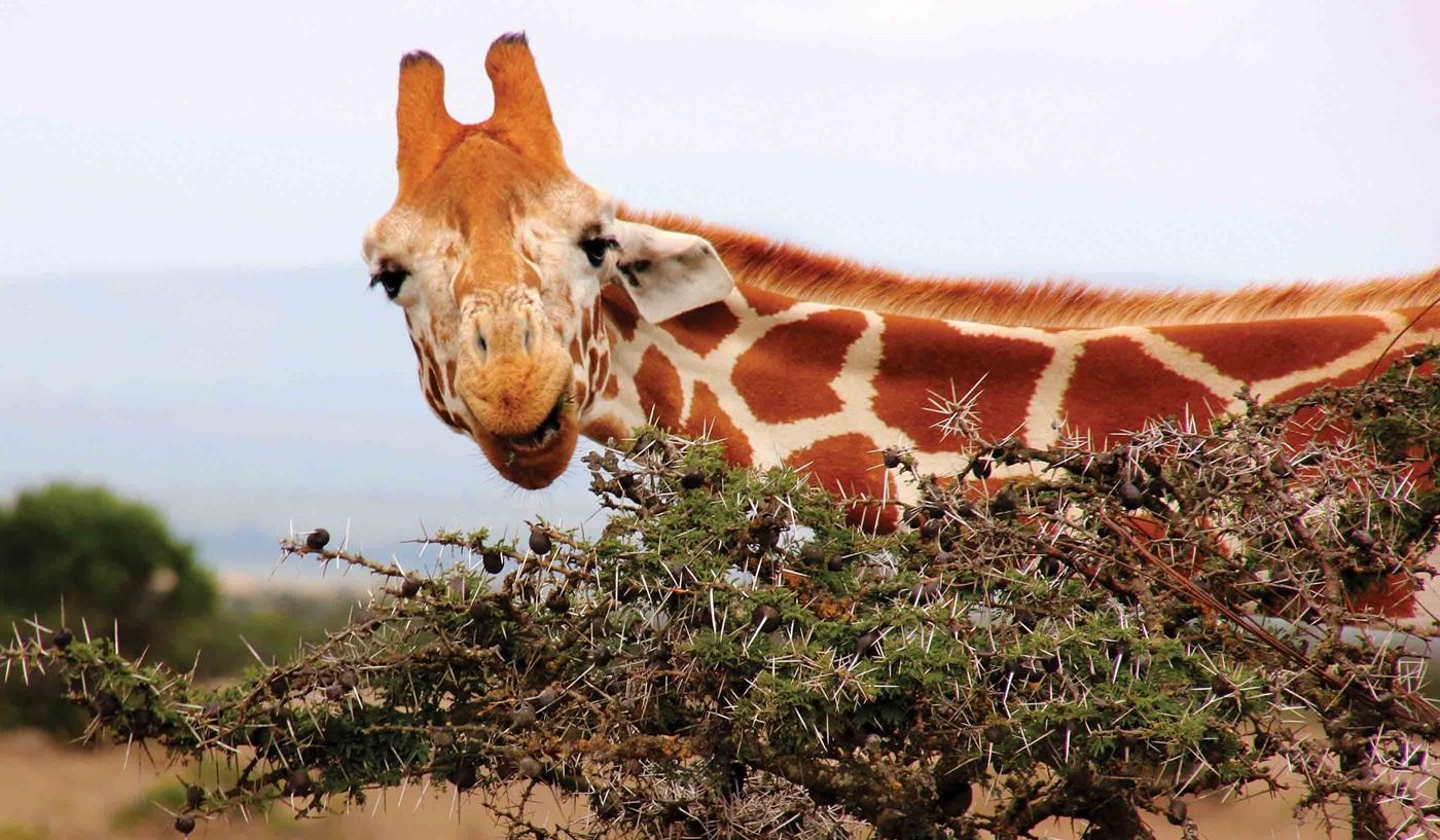 Tanzania Grand Family Safari